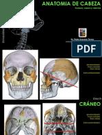 Head anatomy Anatomía de cabeza Univesidad Austral de Chile