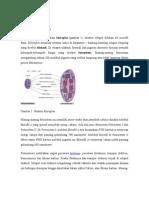 Mekanisme Fotosintesis