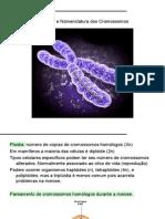 11. Estrutura e Nomenclatura Dos Cromossomos