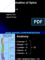 Examination of Spine