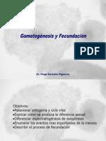 Lec 14 Game to Genesis y Fecundacion
