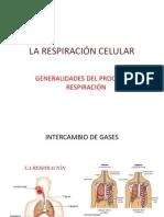 La Respiracion Celular. Presentacion