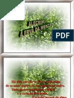 A Import an CIA Do Cha-De-Alecrim