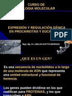 Clase 13 - Regulacion Genica