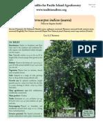 Pterocarpus-narra