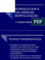1.4_TEJIDOS_FUNDAMENTALES
