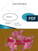 0_bacterii