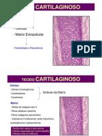 Histologia Tec Cartilaginoso