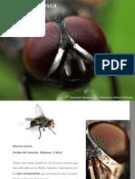 Presentación mosca