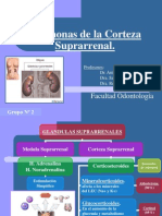 corteza-suprarrenal