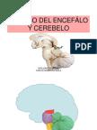 Tronco Encefalico y Cerebelo de JUAN