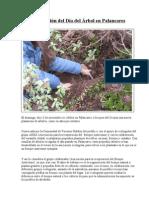 29ª edición del Día del Arbol en Palancares