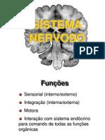 Sistema_nervoso_somático_e_autônomo