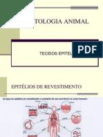 Bio Histologia Animal