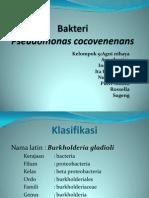 Bakteri pseudomonas cocovenenans