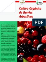 Cultivo Organico de Berries Arbustivos
