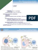 2. Órganos linfoides I