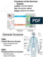 Central Nervous System Anatomy