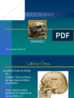 Huesos Del Craneo Hastaboveda