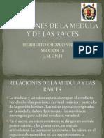 Relaciones de La Medula y de Las Raices Expo Anato