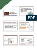 Fisiologia da reprodução machos
