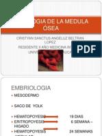 FISIOLOGIA DE LA MEDULA ÓSEA