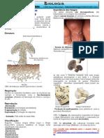 Bio Resumos Fungi