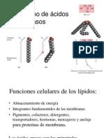 Ex3.14.ácidos grasos (1)