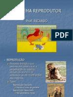 Biologia PPT Sistema Reprodutor