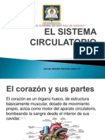 EL SISTEMA CIRCULATORIO 2