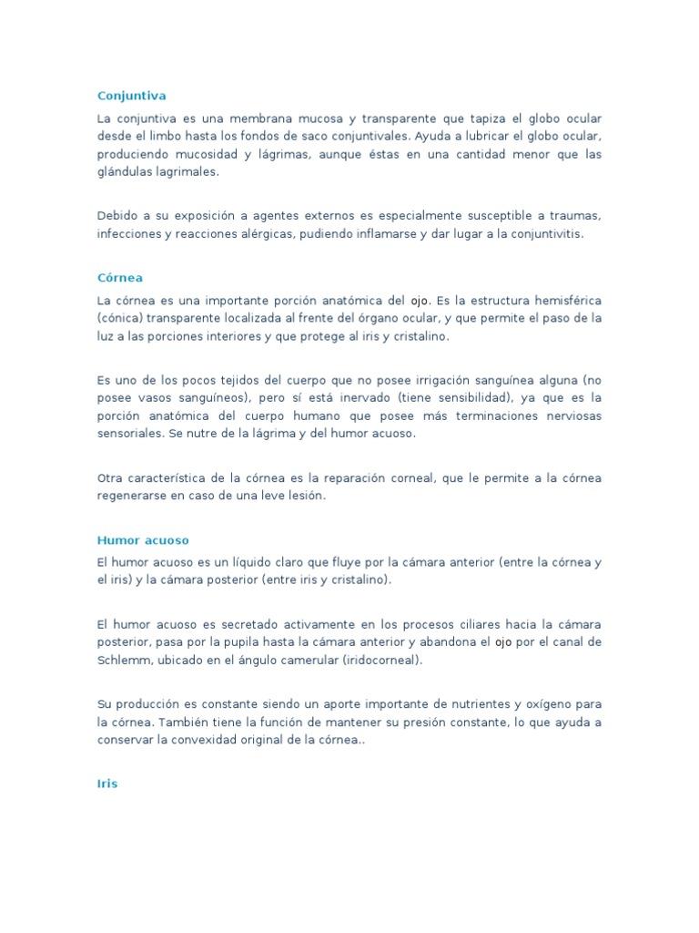 Famoso Anatomía De La Acl Embellecimiento - Imágenes de Anatomía ...