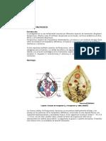 Paragonimus mexicanus [Resumen]