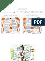 TEMA 21_22 Sistema Nervioso Autonomo