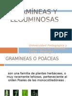 gramineasyleguminosas2-100525205345-phpapp02