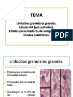 Linfocitos granulares grandes. Células NK