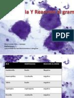 Morfologia y reaccion al gram
