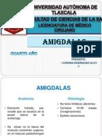Amigdalass