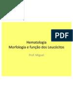 Morfologia e função dos Leucócitos
