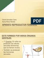 Aparato Re Product Or Femenino Ppt