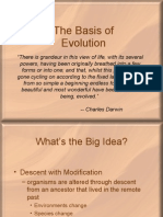 Basis Of the Evolution