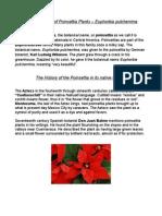 History & Facts of Poinsettia Plants, Euphorbia Pulcherrima