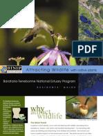 Louisiana; Attracting Wildlife with Native Plants