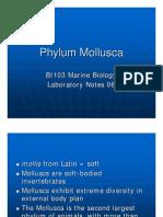 BI103 Lab 06 - Phylum Mollusca