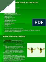 specii albine