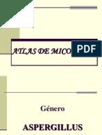 ATLAS DE MICOLOGÍA