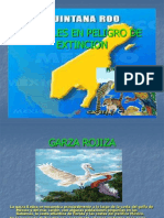 Animales en Peligro de Extincion j.ak