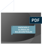 anatomía - próstata