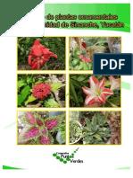 Catalogo de plantas ornamentales de Sinanche, Yucatán