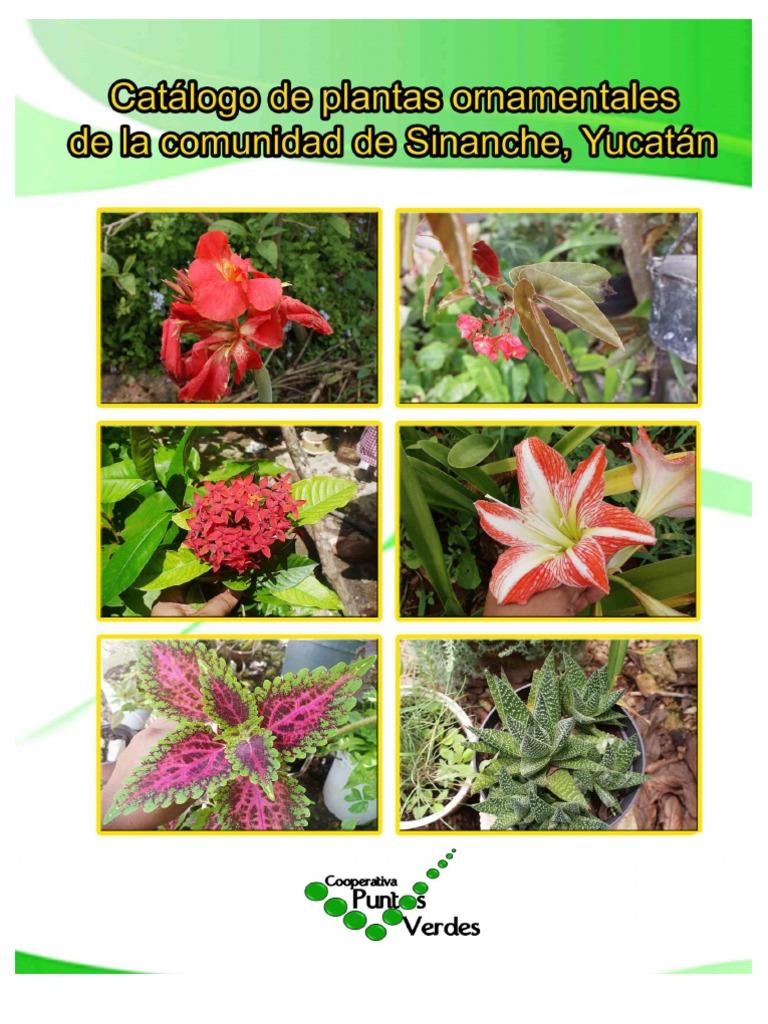 catalogo de plantas ornamentales de sinanche yucat n