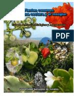 Plantas de Duna y Manglar, Yucatán
